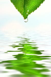 bigstock_Green_leaf_with_water_droplet__14089298